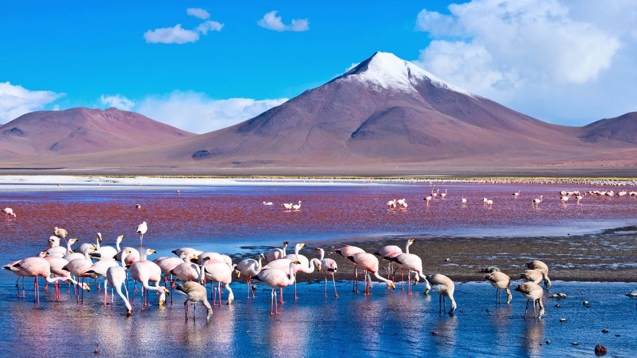 Flamingoes in Laguna Colorada, Bolivia. Picture: iStock