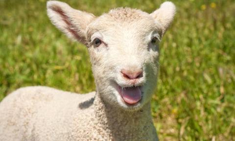 <p><b>Count sheep to fall asleep</b></p> <p>Those old wives have been telling wakeful kids for centuries to close their eyes and count sheep to fall asleep. And it turns out they're right about that as well … Well, sort of.</p>  <p>You see, while there hasn't been a specific scientific study proving that counting actual 'sheep' will work to put you to slumber, the use of visualisation or mental imagery can certainly assist in getting you to the land of nod. How? It can help to distract you from thinking stressful or anxious thoughts – commonly associated with insomnia – which will make you fall asleep sooner. So baa.</p>