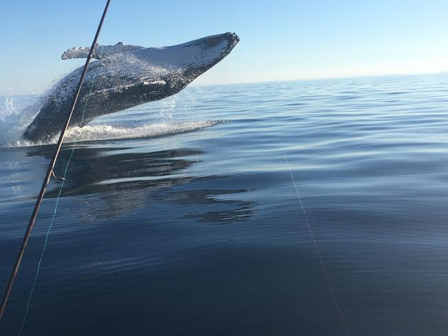 Phil Enright was lucky to capture this beautiful shot just off the coast of Caloundra.
