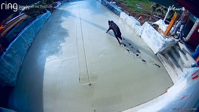 Hilarious moment dog runs through concrete