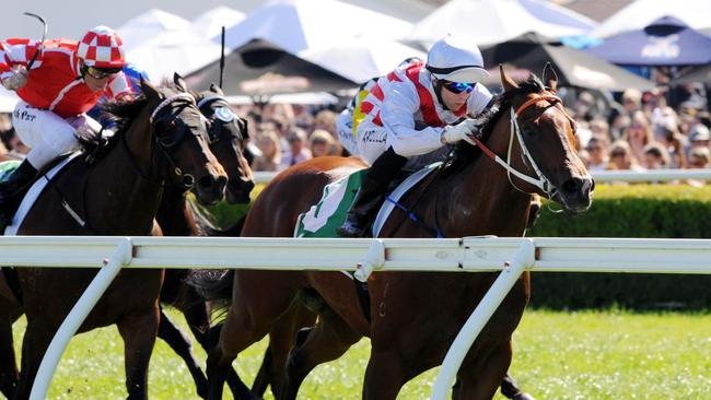 Deep Field will have a jumpout at Flemington on Friday. Picture: Simon Bullard