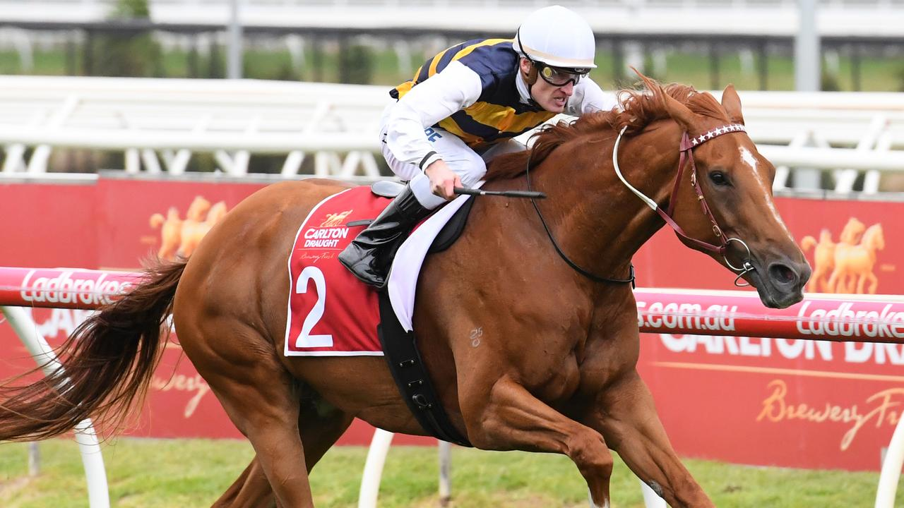 Gailo Chop will push forward from a wide gate in the Underwood Stakes. Picture: Getty Images