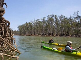 The Helping the Murray Sing project. Picture: Jason Macqueen