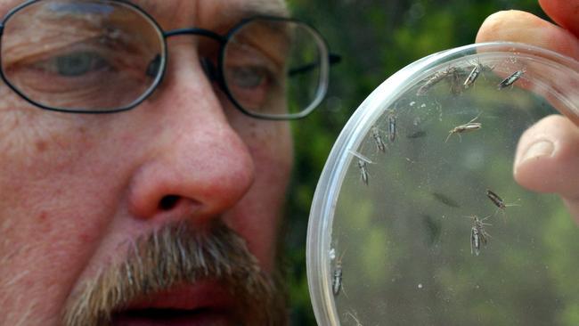 Rural Entomologist Lionel Hill takes a close up look at Diamondback moths.