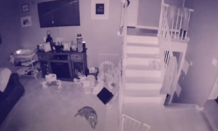 'Ghost of child' caught playing on home CCTV