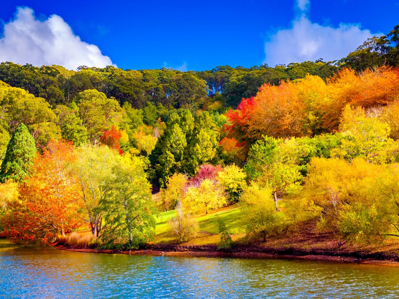 Colorful Australian autumn in Mount Lofty, Adelaide Hills, South Australia
