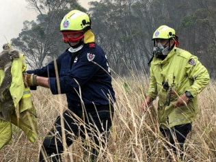 Four quick-thinking Fire & Rescue NSW fire-fighters ran towards a bushfire to rescue a frightened koala. Horror fires in the state have put extra strain on the species. Image: Supplied.