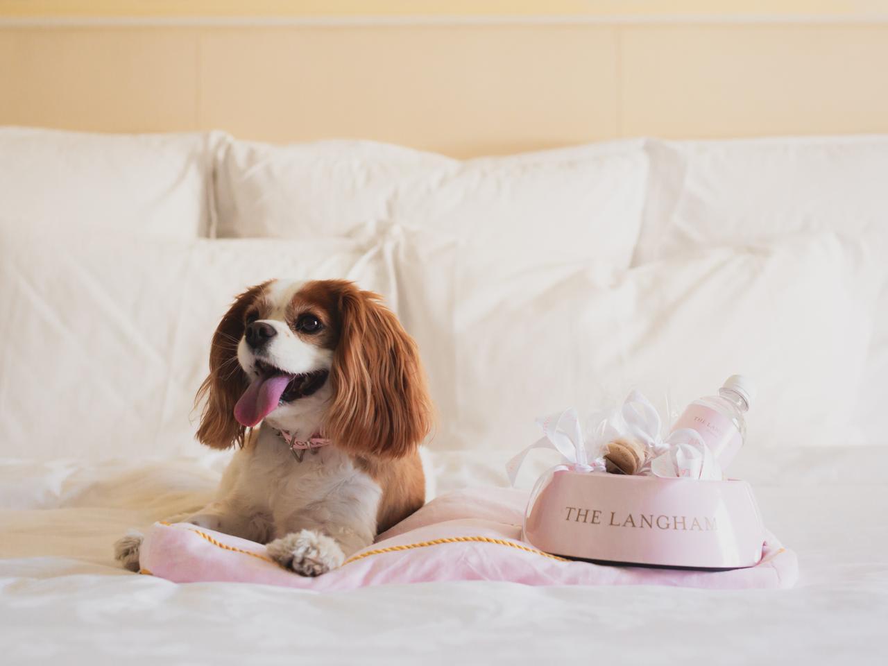A dog at The Langham luxury hotel, Sydney.