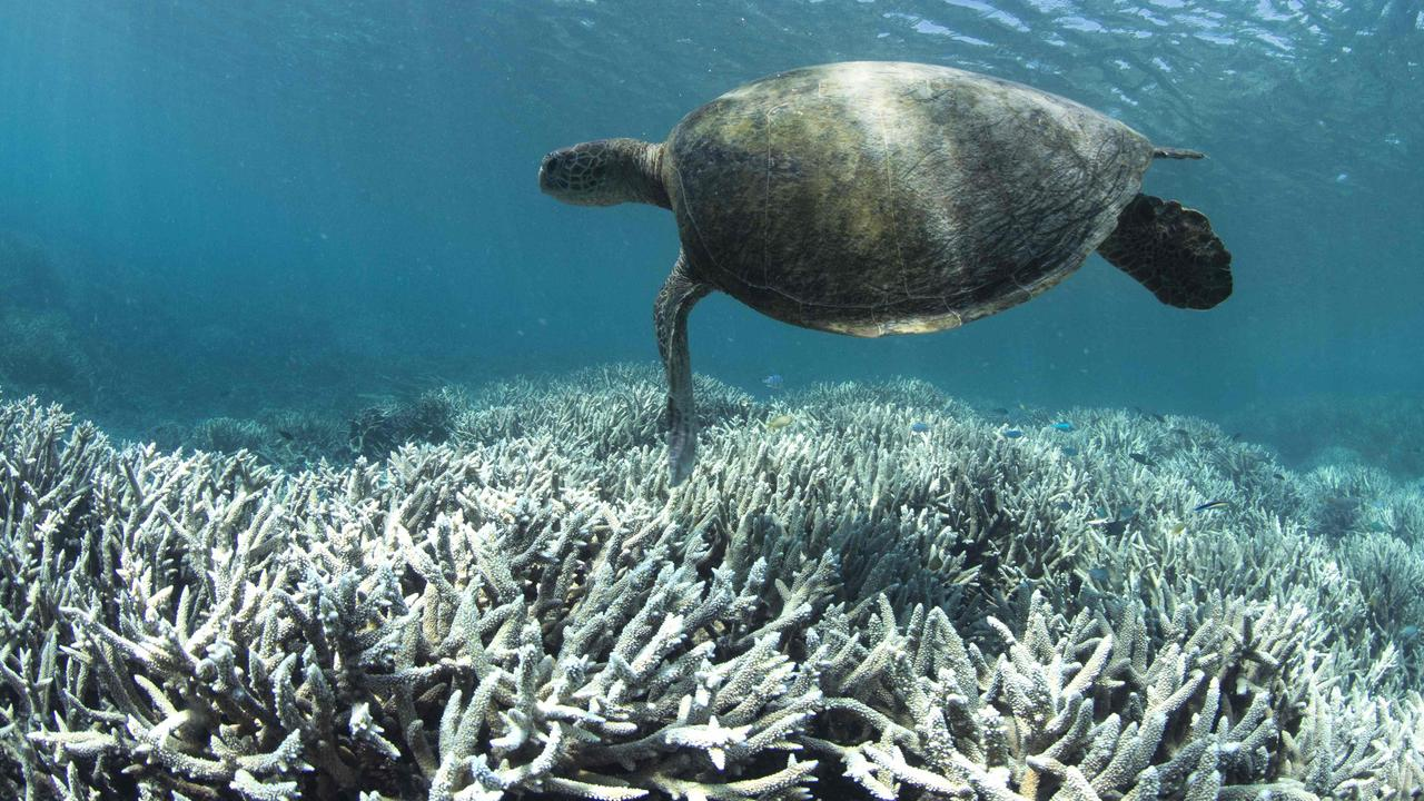 A turtle swimming over bleached coral at Heron Island on the Great Barrier Reef, Queensland. Picture: AFP/XL Catlin Seaview Survey
