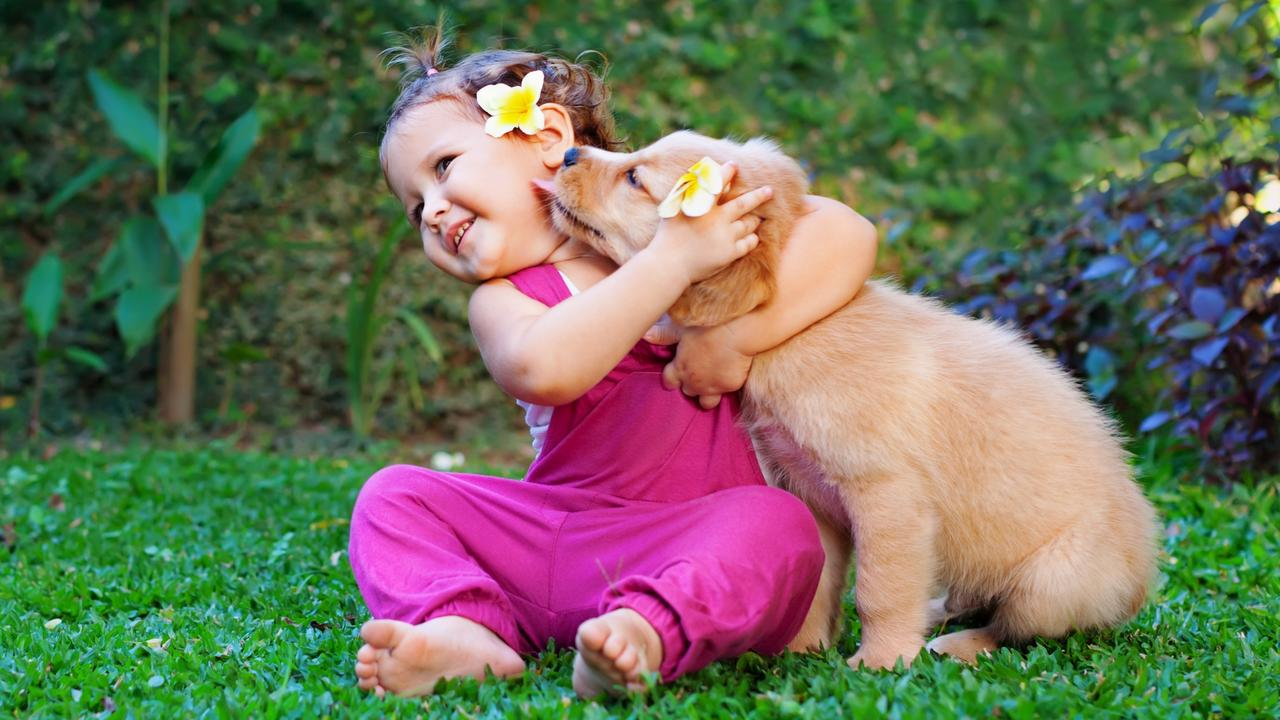 Happy child play with family pet - labrador puppy