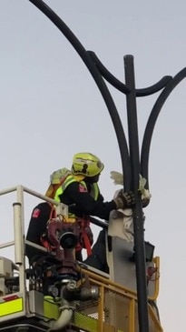 Firefighters Rescue Cockatoo With Neck Stuck in Light Pole