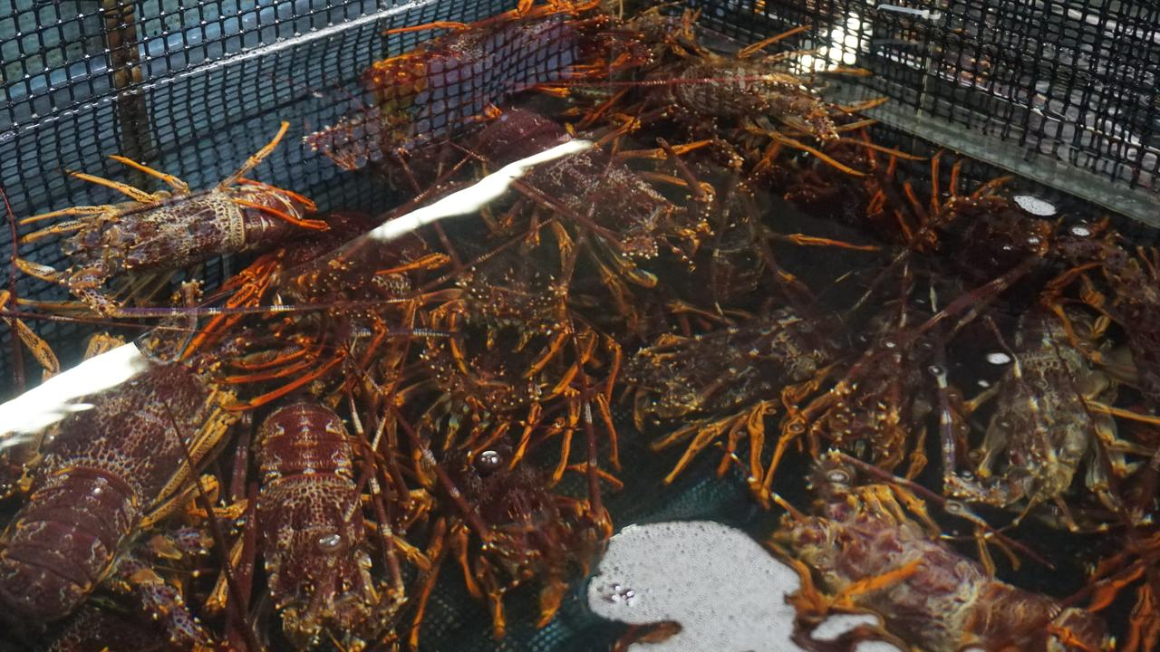 South Australian southern rock lobsters have been smuggled through Hong Kong.