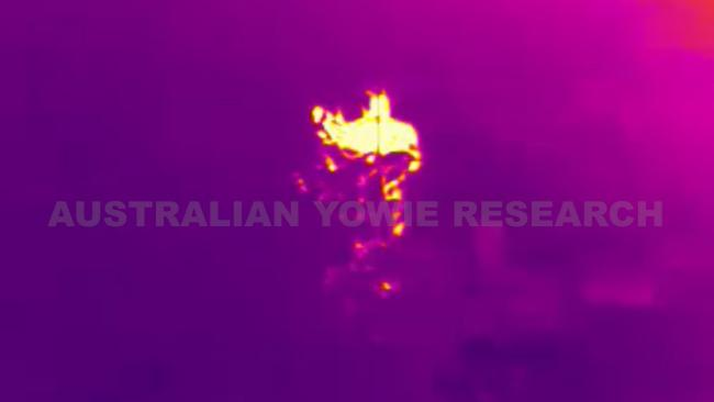 """The legend: The Yowie The location: Gold Coast hinterland, Qld The story: Just last month, researcher Dean Harrison released video which uses thermal technology - the glowing glob pictured here - to identify what he believes are two """"nine-feet tall yowies in the wilds of Springbrook National Park. Common in Aboriginal legends, Yowies are often described as an Australian version of Bigfoot."""