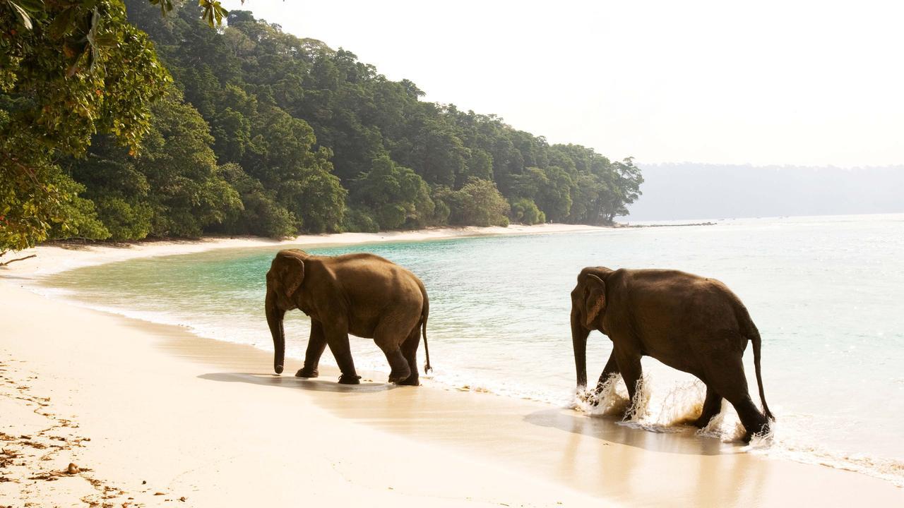 Elephants on Swaraj Dweep Island.