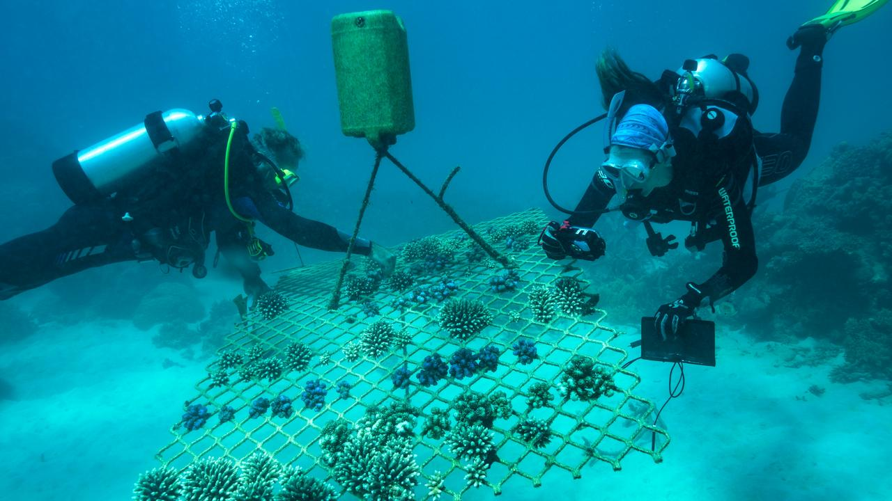 Man-made underwater coral nurseries are helping improve the health of the Great Barrier Reef.