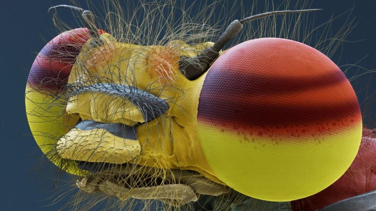 Forget landing on the moon. This extreme close-up of a red damselfly looks like an exotic villain from Star Wars of Doctor Who. Picture: Eye of Science/Science Photo Library