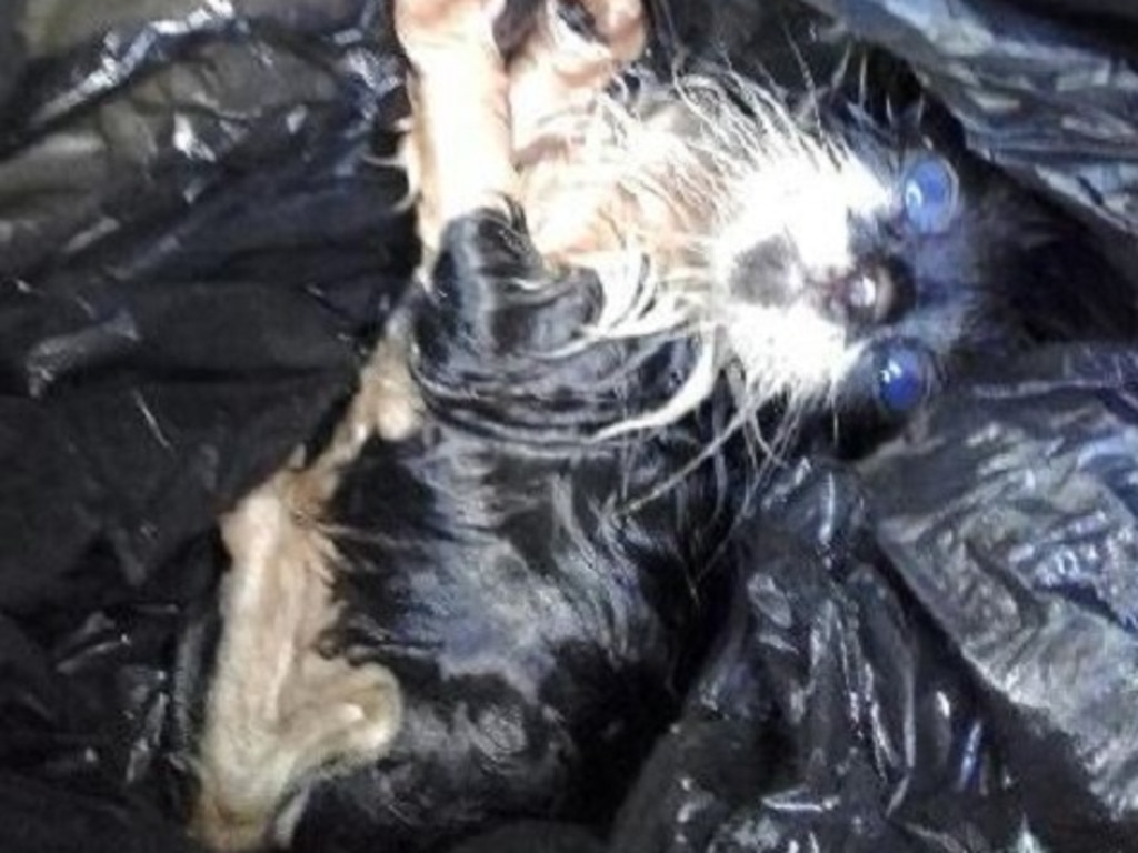 The kitten was found crying for help inside a garbage bag. Picture: NSW Police/Facebook