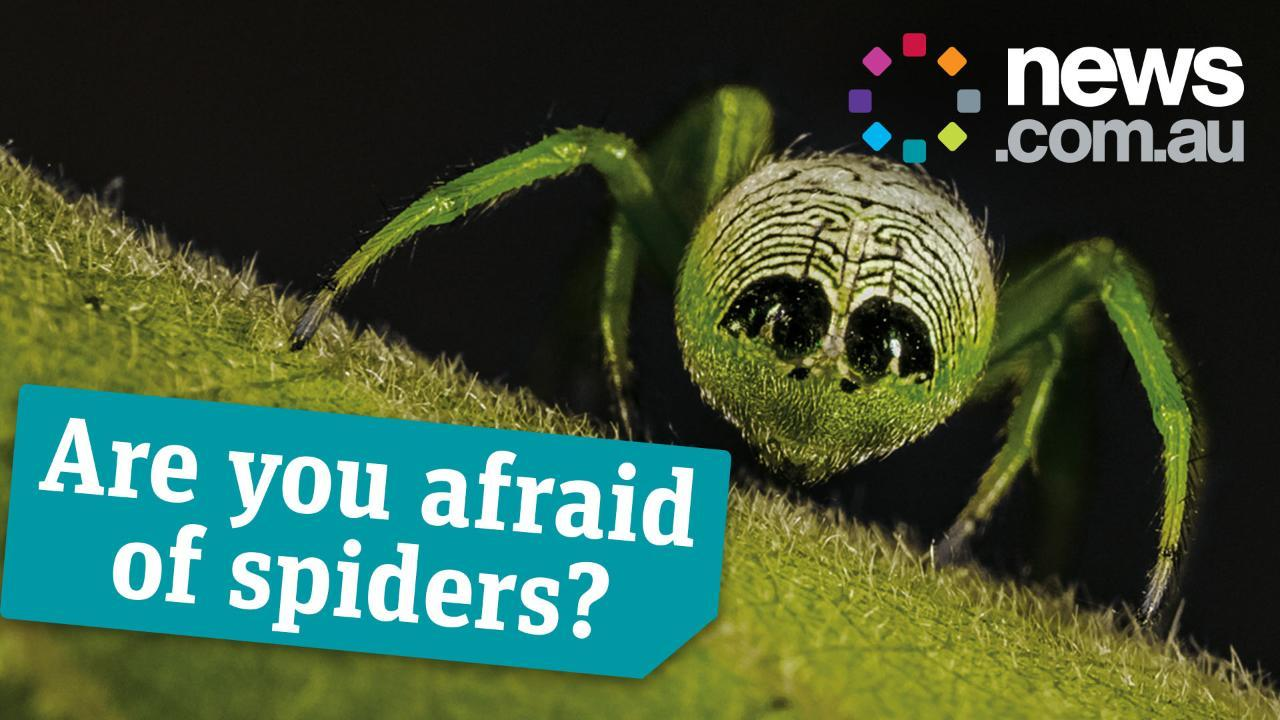 Are you afraid of spiders?