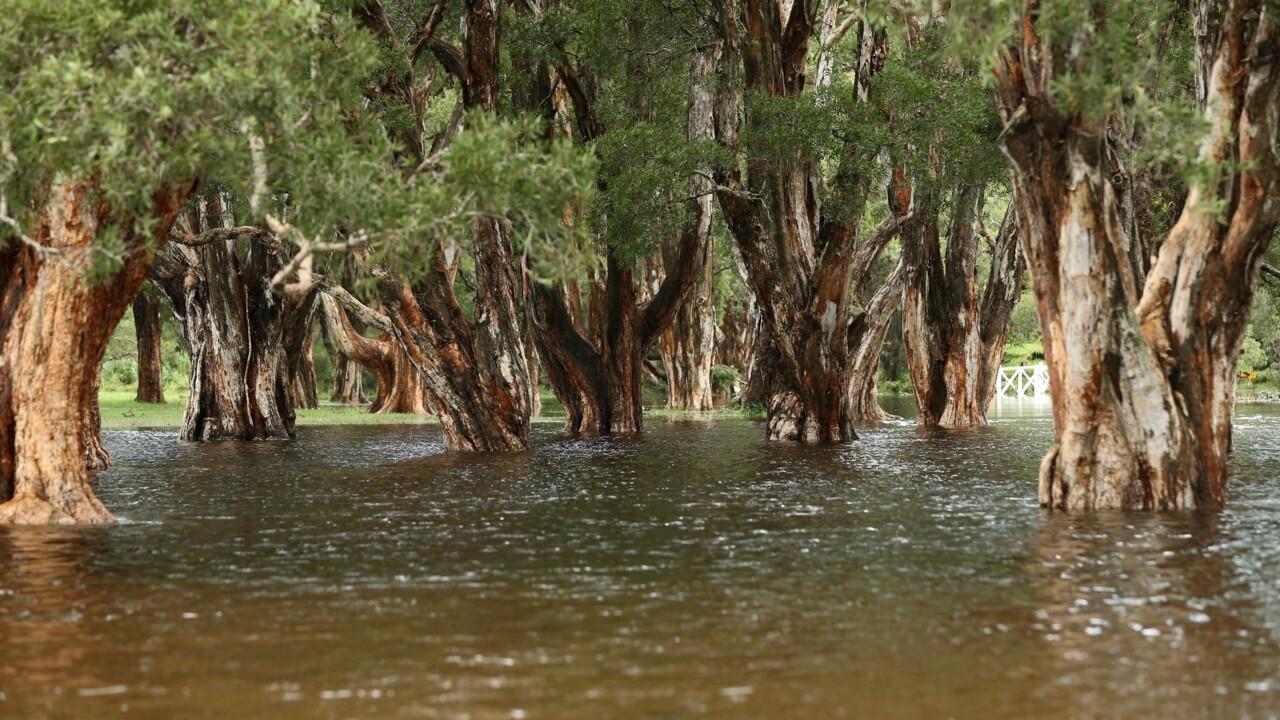 Qld faces dangerous floods as Tropical Cyclone Uesi edges closer to coast