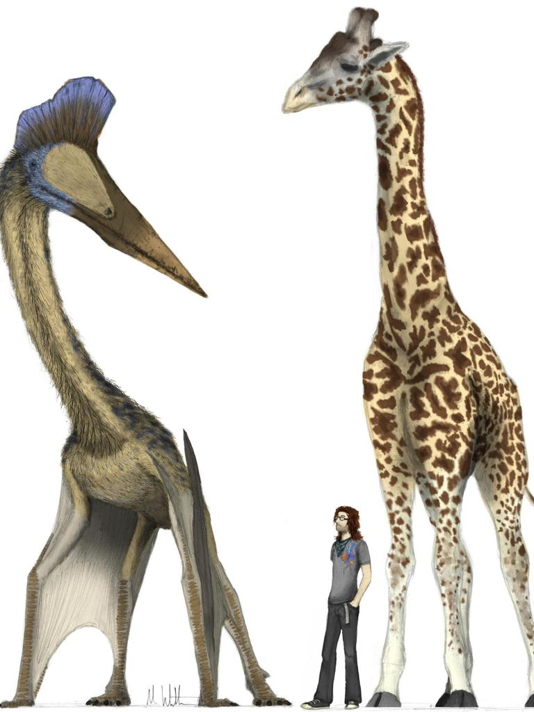 Handout photo issued by Dr Mark Witton from the University of Portsmouth of the giant, 10m span pterosaur alongside a record breaking 6m tall giraffe. Controversial claims that enormous prehistoric winged beasts could not fly have been refuted by the most comprehensive study to date which asserts that giant pterosaurs were skilled in flight.