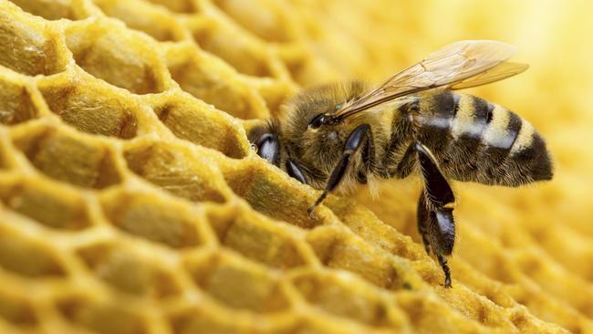 Manuka honey is produced in Australia and New Zealand.