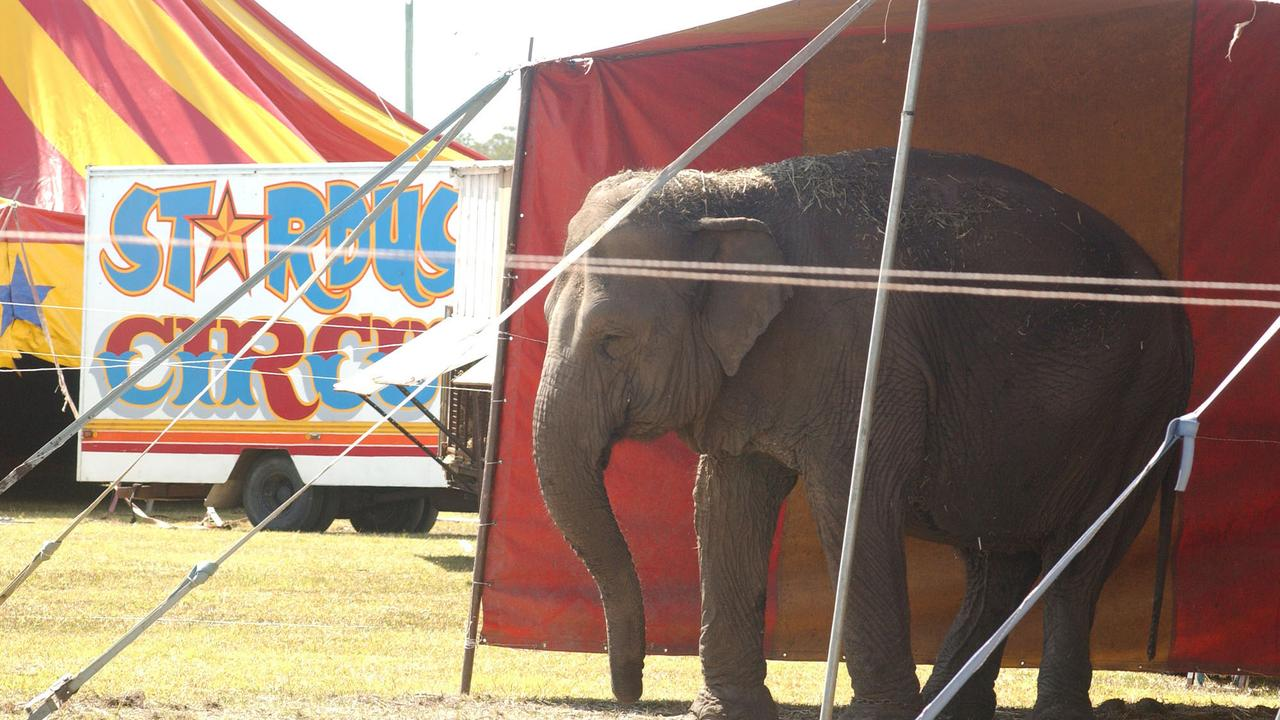 Arna, pictured at Stardust Circus, crushed her handler Ray Williams, 57, to death on December 27, 2007.