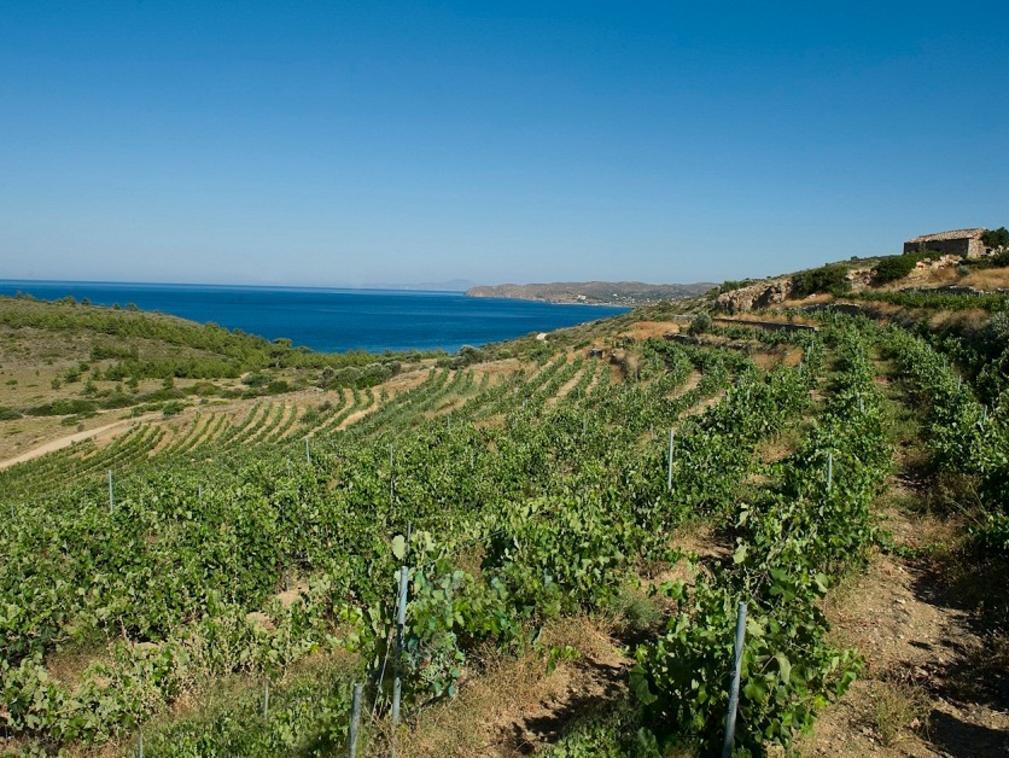 Kefala Winery, Chios.