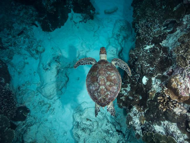 LADY ELLIOT ISLAND Beautiful landscapes and breathtaking views are not the only things you can see from above on the Great Barrier Reef. Take to the water and you will find some of the world's most incredible creatures just below the surface. Lady Elliot Island is home to an abundance of nesting turtles, manta rays and migrating whales, just to name a few, making the island a haven for nature lovers. Picture: Tourism and Events Queensland    See also  • Australia's 20 greatest natural wonders  • How well do you know Australia's 20 World Heritage sites?