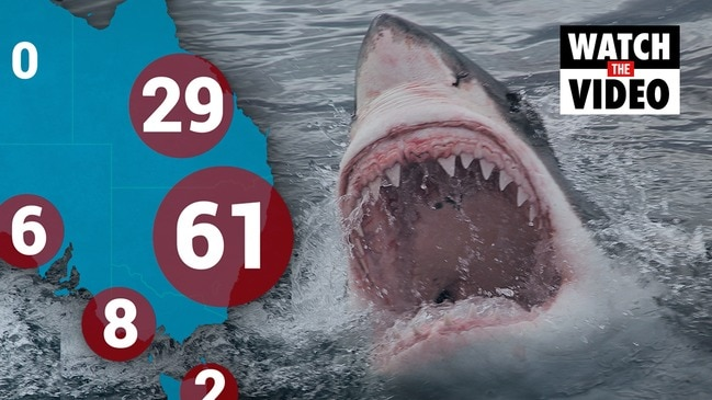Why this is the deadliest year for shark attacks since 2012