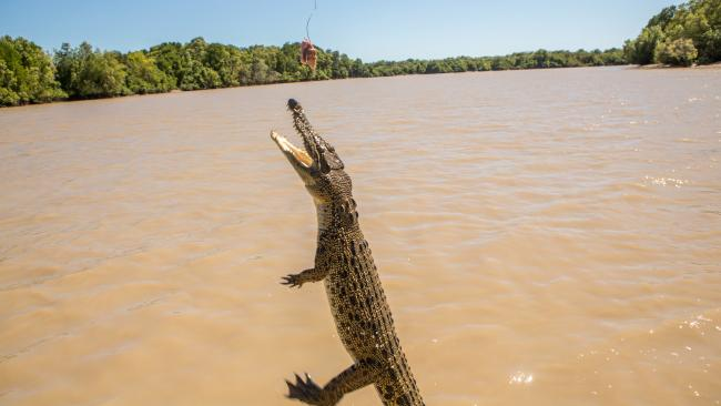 3/10 Adelaide River Queen Jumping Crocodile Cruise The small vessel brings you up close to crocodiles in the wild.