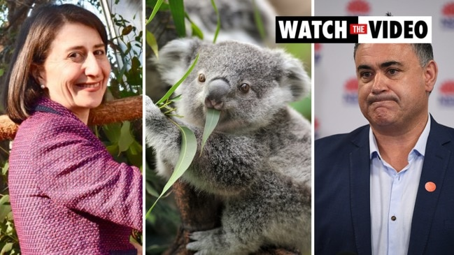 Koala war: NSW government crisis averted after Barilaro backs down