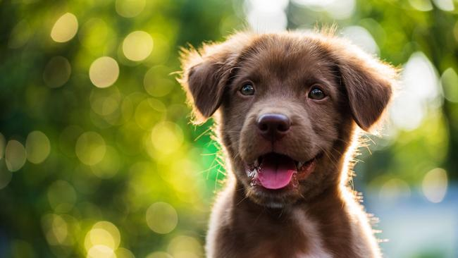 The custody of pets can create a bitter, emotional battle in divorce settlements.