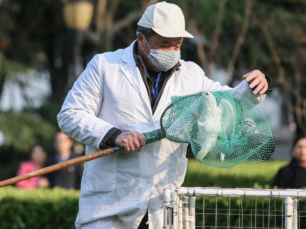 A Chinese health worker collecting a pigeon from a trap placed at a park in Shanghai.