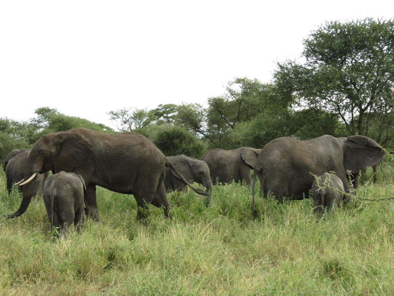 Supplied Travel Mother elephants and thier babies in a quiet corner of Tarangire National Park. Pic Sarah Nichols