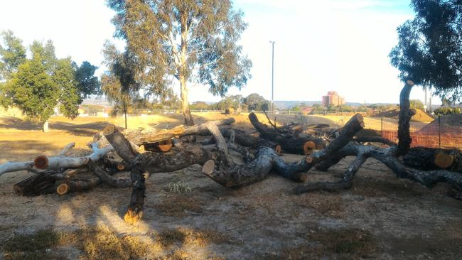 North Plympton residents are upset about a large number of trees felled at Weigall Oval. Picture: Michelle Etheridge