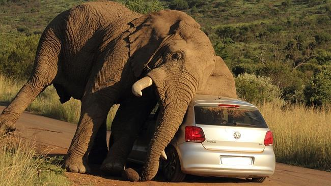 EXCLUSIVE: Elephant relives an itch against car