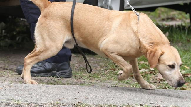 Areas with more young Indigenous people are likely to be targeted with sniffer dogs.
