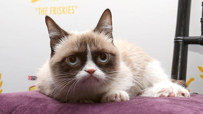 Grumpy Cat attends The Friskies 2013 on October 15, 2013 in New York City. Photo: Mike Lawrie.