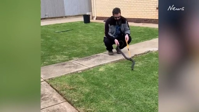South Aussies take their snakes for a walk