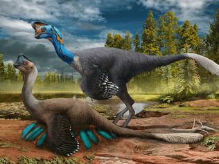 The fossil of a dinosaur sitting on a nest of eggs with fossilised babies inside has been unearthed in a world-first discovery that sheds light on how the creatures hatched their young. Image: Carnegie Museum of Natural History. For Kids News