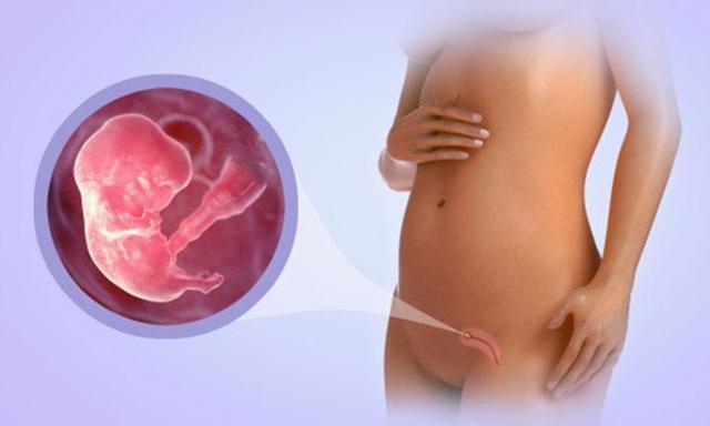 8 Weeks Pregnant- Symptoms and genetic testing
