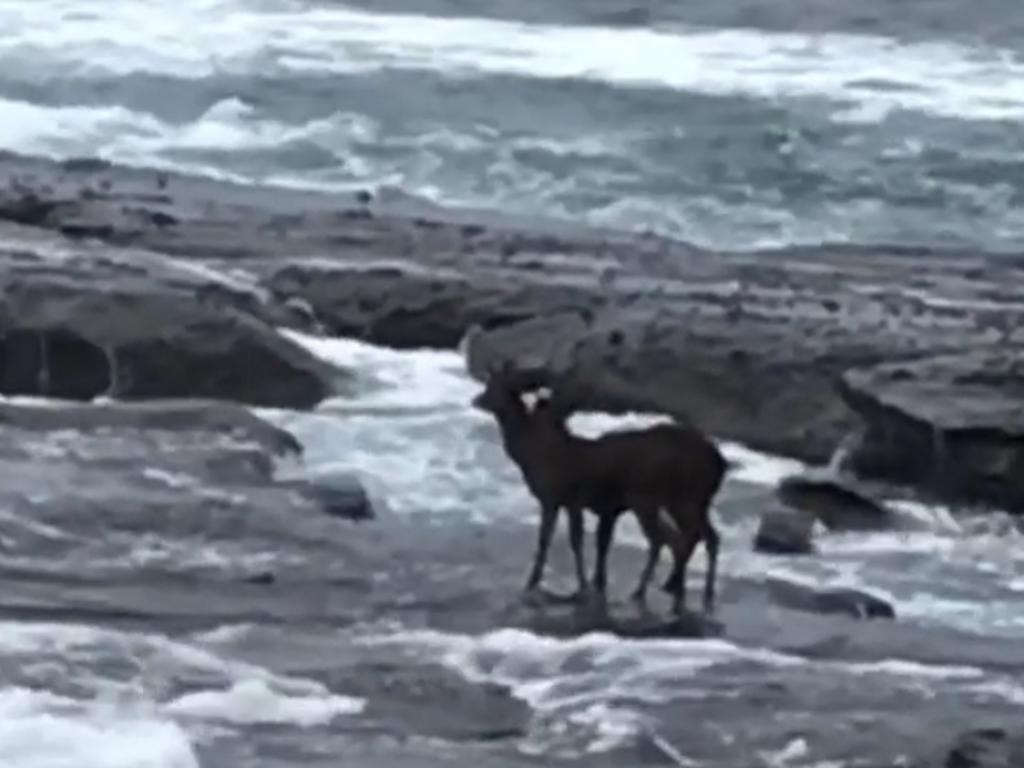 Two of them were knocked into the water off a rock platform. Photo: Mia Bronneberg.
