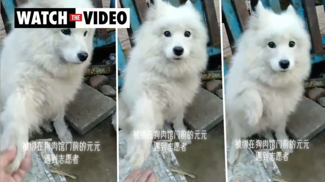 Dog in Chinese wet market holds out paw, is saved