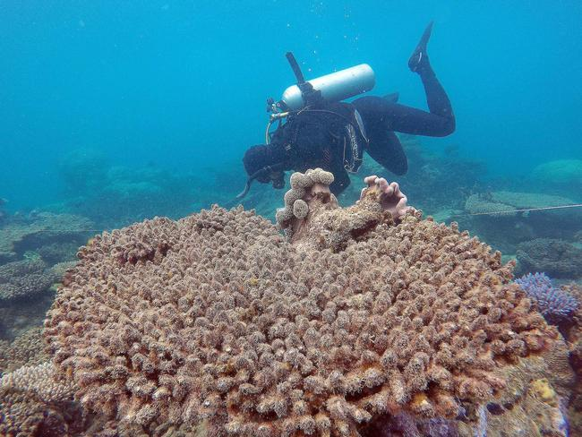 Scientists assess coral mortality on Zenith Reef following the bleaching event, Northern Great Barrier Reef, November 2016. Picture: ARC Centre of Excellence for Coral Reef Studies, Greg Torda/AAP