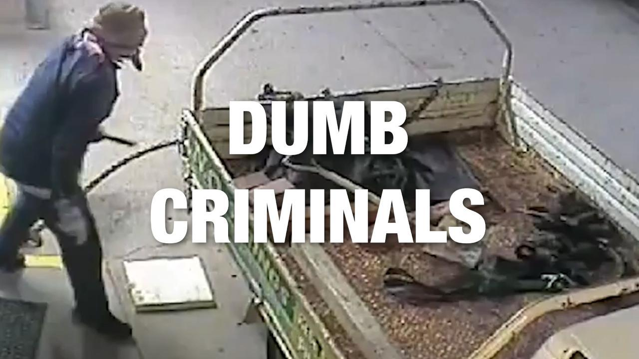 Criminals Found Guilty... of Being Dumb. Credit - Various via Storyful