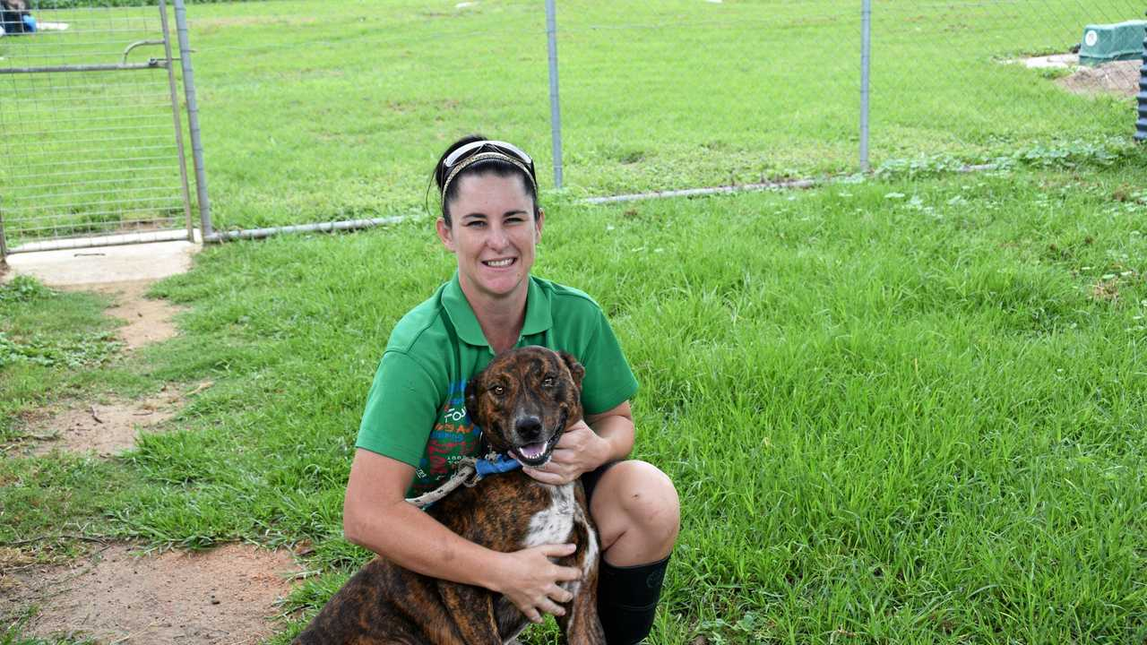 Animal shelter in desperate need of volunteers | The Courier Mail