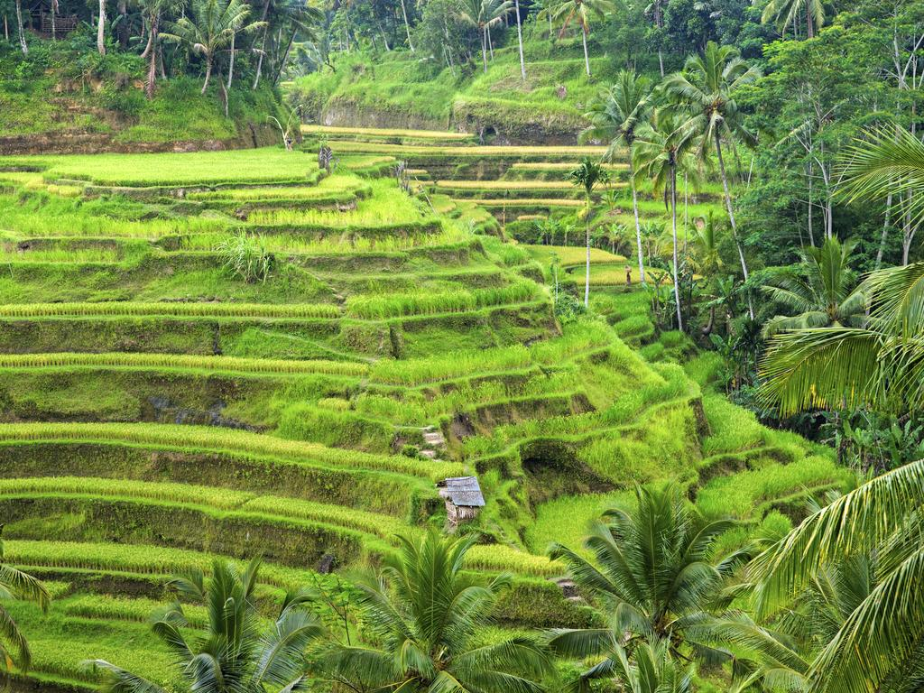 When it comes to trekking in Bali, the dry season is a much more comfortable time to do it. Picture: Thinkstock