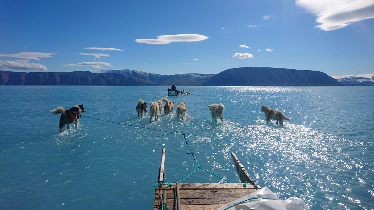 Sled dogs walking on water not ice after big Greenland melt