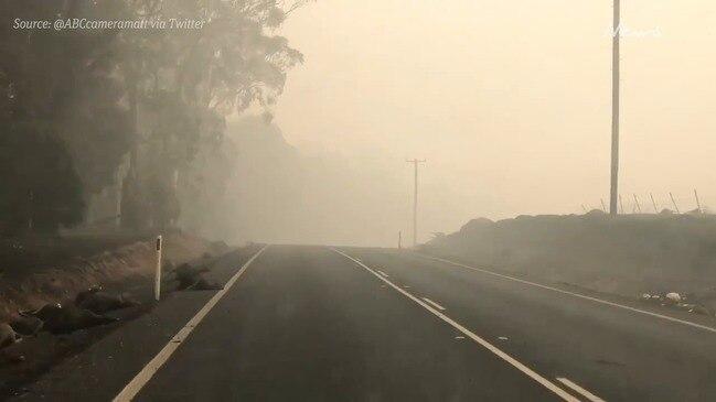 Horrific scenes as dead animals line Batlow roads