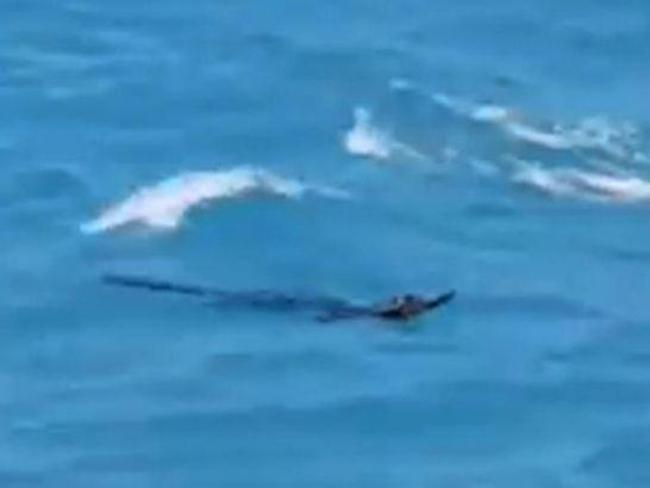 A crocodile has been spotted in waters off Phuket in Thailand. Picture: Phuket Fishing Group/Facebook